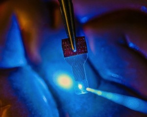 See-through sensors, which have been developed by a team of UW-Madison engineers, should help neural researchers better view brain activity.Credit: Justin Williams' Research Group