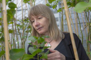 The research gives scientists clues about the genes that control plant structures and how we can manipulate them to our advantage.Source: Paul Efland/UGA