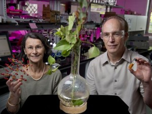 Rutgers researchers Martha Greenblatt (left) and Chalres Dismukes (right) have developed a cost-effective energy storage technology to advance sustainable energy.Image: Nick Romaneko/Rutgers University