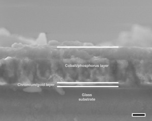 The lab fabricated the 500-nanometer films by anodyzing a cobalt film electrodeposited on a substrate.Image: Rice University