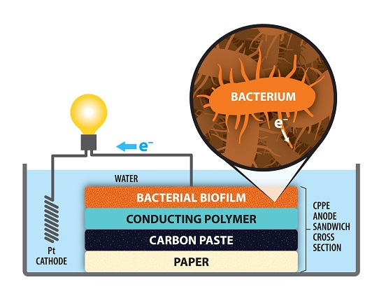 microbial fuel cell research paper Smaller, cheaper microbial fuel cells turn urine into describes a new design of microbial fuel cell that's a copy of the paper is available to.